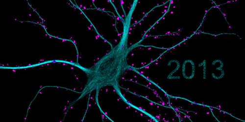 neuronLP723